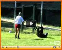 Video_ronzone_2010